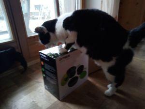 Katze am Kochen